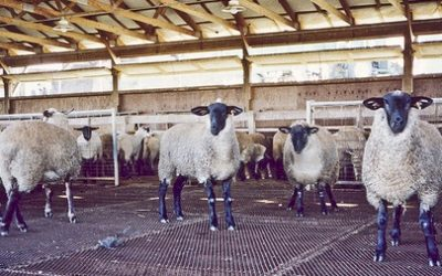 Ridgeways' Expanded Metal Mesh Sheep Flooring